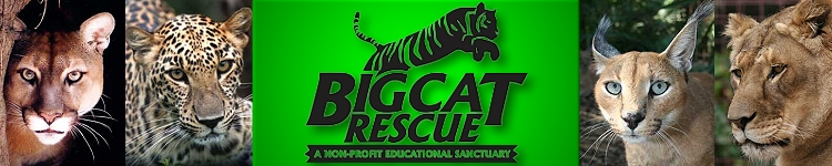 Big Cat Rescue